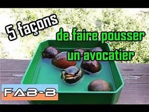 Comment Faire Pousser Des Avocats : 5 m thodes pour faire germer un noyau d 39 avocat youtube ~ Melissatoandfro.com Idées de Décoration