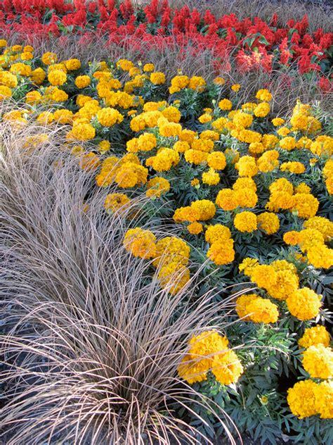 Kādas puķes vēl var sēt? + Pieci padomi dēstu audzēšanā ...