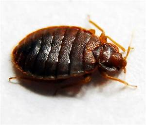 bed bug lawsuit 28 images family files 1 5m suit over With bed bug litigation