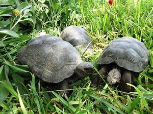 29 Galapagos Tortoises Rescued From Wildlife Trafficking