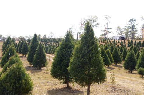yuletide christmas tree farm is a place to make christmas