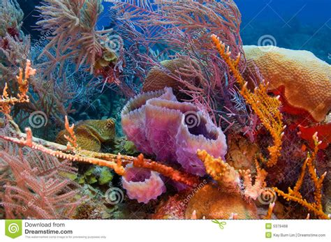 Colorful Reef Stock Photo Image Of Colorful Aquatic