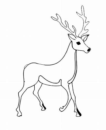 Deer Coloring Male Tailed Whitetail Pages Printable