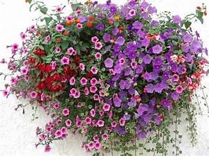 Blumen Für Den Balkon : unsere leistungen blumen hartmann gmbh oberg nzburg ~ Lizthompson.info Haus und Dekorationen