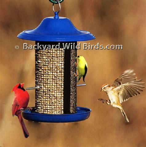 cobalt blue bird feeder at backyard wild birds