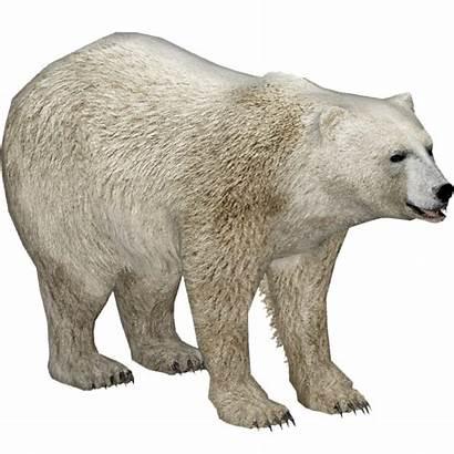 Bear Polar Sam Wiki Zt2