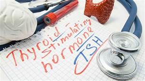 A Comprehensive Guide To Tsh Levels For Your Thyroid