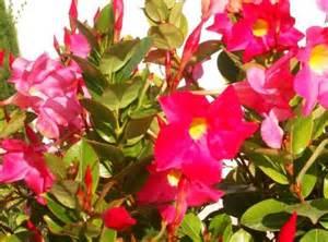 fleurs r 233 sistant au soleil