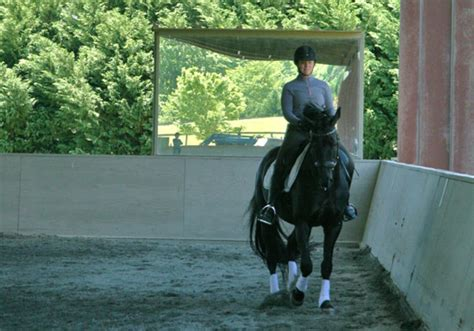 traveling  travers dressage today