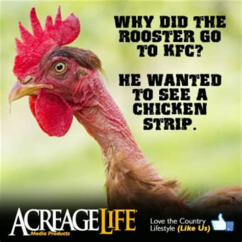 Rooster Jokes Meme - country joke why did the rooster go to kfc he wanted to see a chicken strip www acreagelife