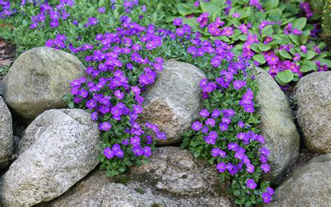 flowers for rockery how to build and plant an alpine rock garden david domoney