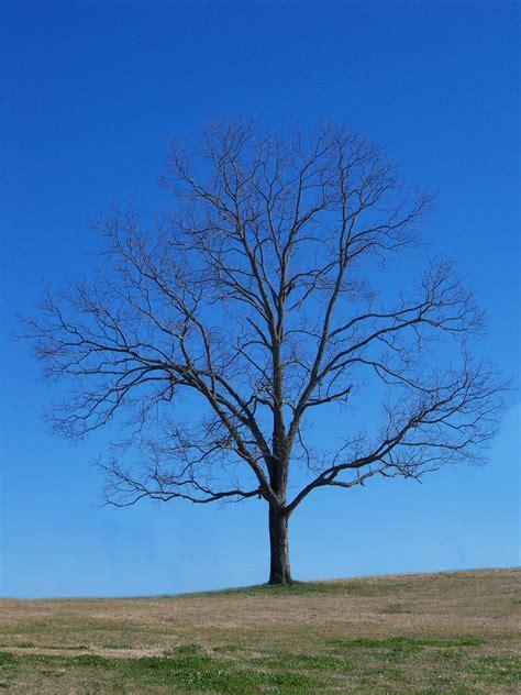 dry trees public domain