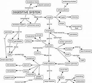 Bestseller  Digestive Organs Graphic Organizer Answers