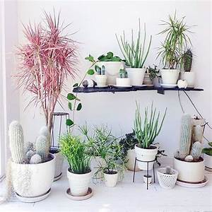 How to Decorate Your Interior with Green Indoor Plants and ...