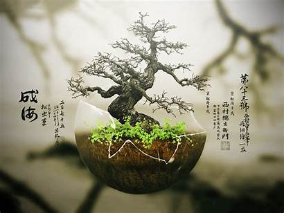 Bonsai Desktop Wallpapers Backgrounds Mobile