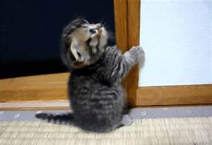 cats that are funny cute kittens gif | WiffleGif