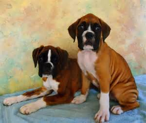 American Boxer Puppies