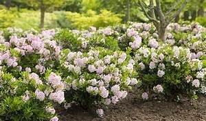 Bäume Für Kübel : bloombux k bel und heckenpflanze mit ~ Michelbontemps.com Haus und Dekorationen