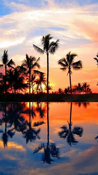 Screen Homescreen Lockscreen Palm Trees Via