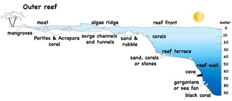 coral reefs info