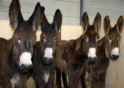 matanza de burros en paraguay efeverde