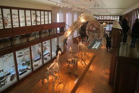 square louis bureau nantes le muséum d 39 histoire naturelle nantais vous l 39 avez fait