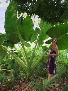 Wurzeln Im Kopf Berechnen : polynesien k nigreich tonga tongatapu 2 ~ Themetempest.com Abrechnung