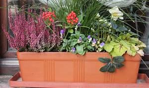 Fleur D Hiver Pour Jardinière : fleurir les jadini res en hiver ~ Dailycaller-alerts.com Idées de Décoration