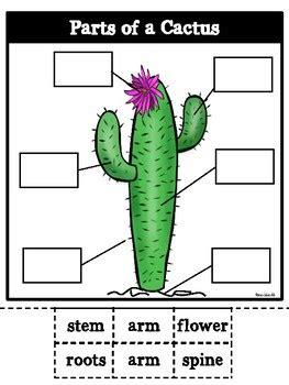 parts   cactus  rae elliott teachers pay teachers