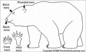 polar bear printout enchantedlearningcom With arctic fox diagram