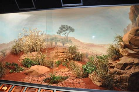 lighting for bearded dragon vivarium vivarium ideas what a beautiful desert scene my pets