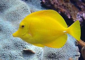 Top 15 Most Beautiful Fishes in the World