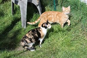Site De Discussion : bienvenue sur le site le chat forgeron le chat forgeron ~ Medecine-chirurgie-esthetiques.com Avis de Voitures