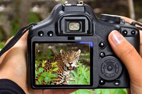 lenses  wildlife photography nikon canon
