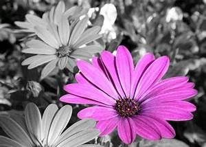 Schwarz Weiß Bilder Mit Farbe Städte : fotoprogramm online zum erstellen eines schwarz wei fotos mit farbe programm fotografie ~ Orissabook.com Haus und Dekorationen