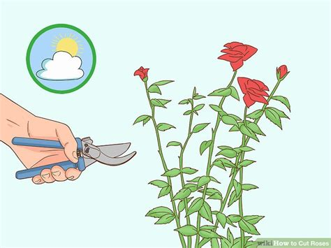 3 Ways To Cut Roses