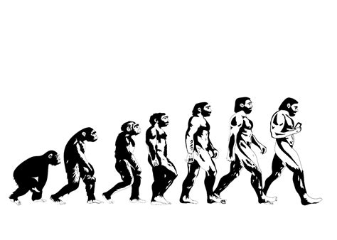 Evolution Wallpaper by Evolution Of Wallpaper Evolution Of