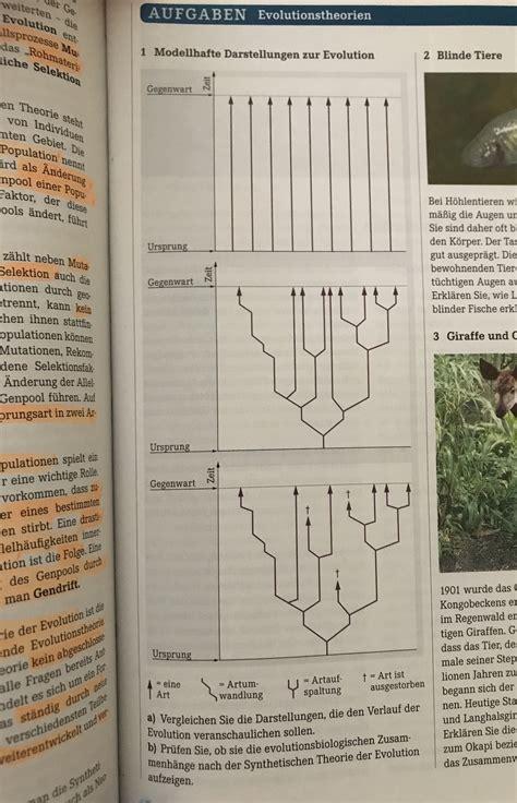 evolutions biologie wie ist der verlauf schule