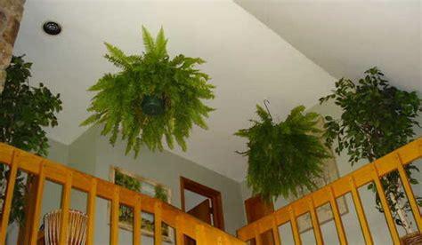 plante dans la chambre 9 plantes d intérieur qui nettoient l air et qui sont