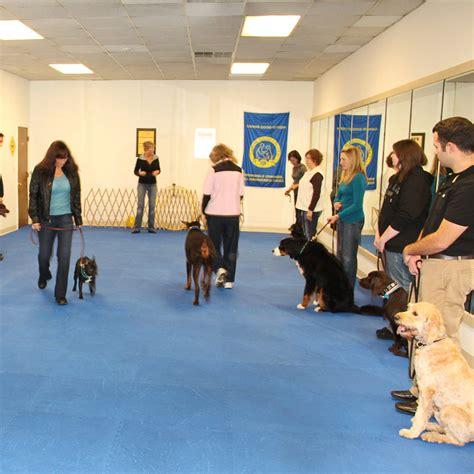 dog agility mats dog agility flooring flyball mats  dogs