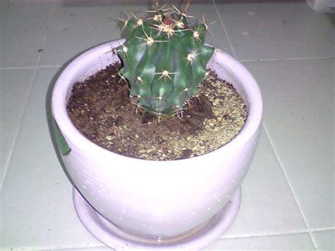 สวนแคคตัสสวย: เฟโรแคคตัส (Ferocactus)