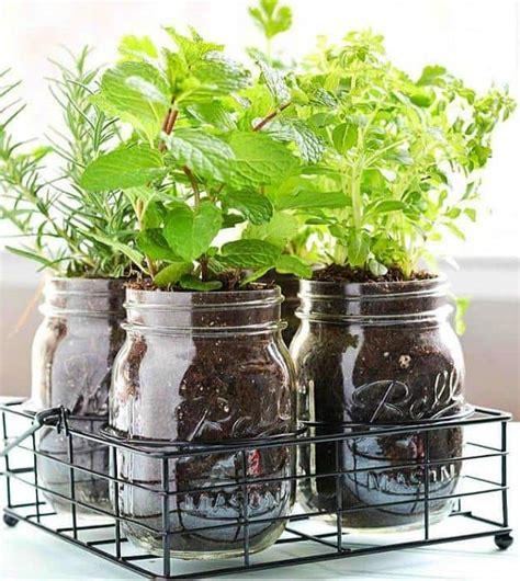 indoor kitchen garden ideas indoor herb garden ideas homesteading indoor gardening tips