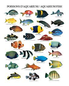 cuidados del acuario agosto