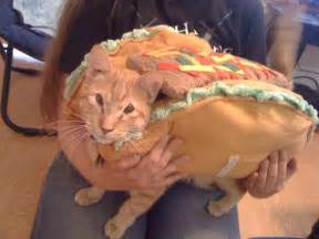 pet costumes for cats pet costumes 20 pix of dressed up cats
