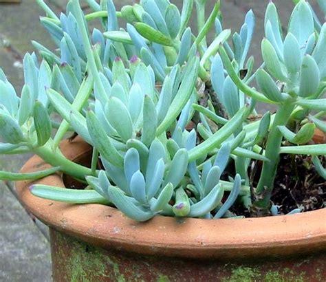 images succulents succulents