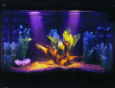 black light aquarium fish n tips temperament fresh water fish