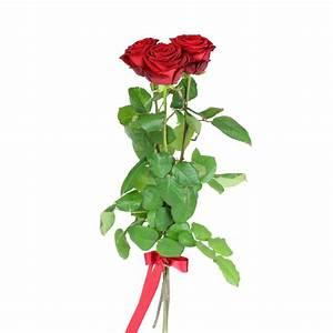 1 Rote Rose Bedeutung : rote rosen dolls blumen ~ Whattoseeinmadrid.com Haus und Dekorationen