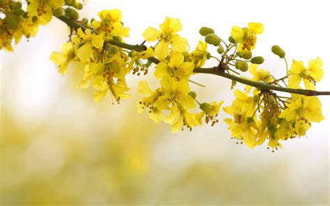 hd yellow wallpapers