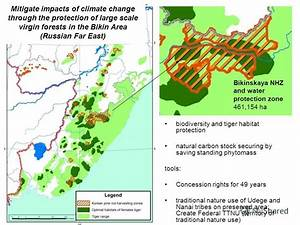 """Презентация на тему: """"Strategy for sustainable forest ..."""
