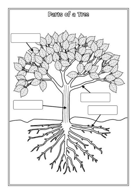 parts   tree labelling worksheets sb sparklebox